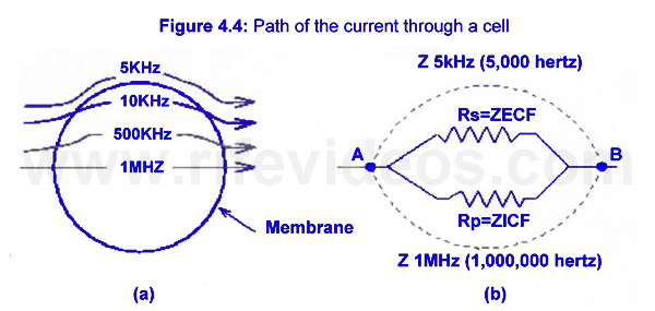 Bio-Electrical Impedance Photo #7